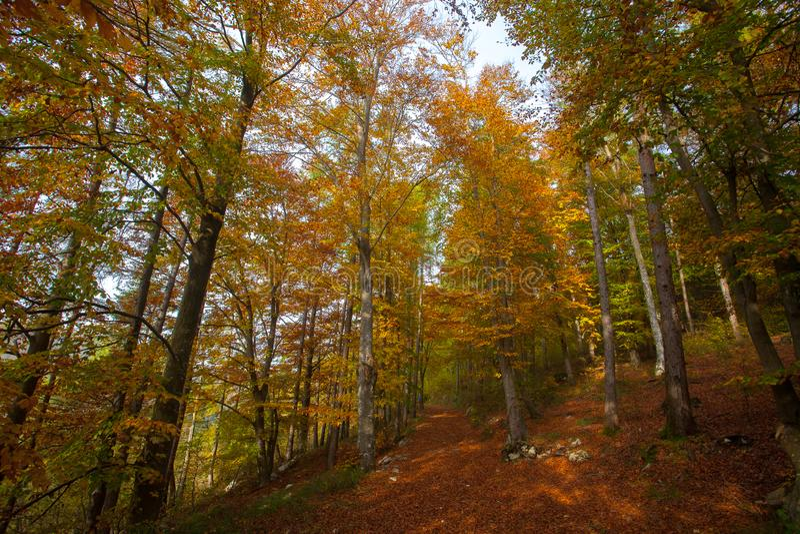 Trees in autumn season background. Autumn lansdscape. Trees in autumn season background. Beauty in nature. Autumn lansdscape royalty free stock photo