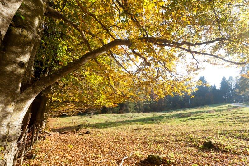 Trees in autumn season background. Beauty in nature. Autumn lansdscape. Trees in autumn season. Beauty in nature. Autumn lansdscape stock images