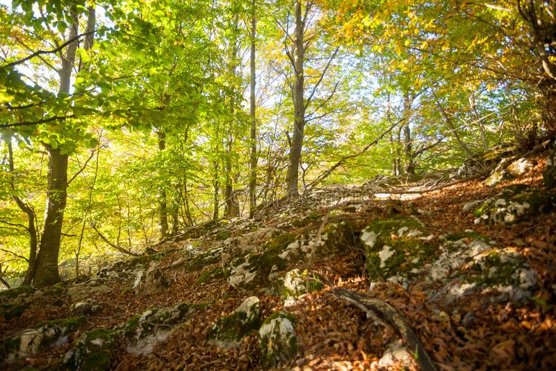 Trees in autumn season background.Autumn lansdscape. Trees in autumn season background. Beauty in nature. Autumn lansdscape royalty free stock images