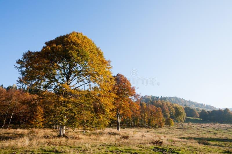 Trees in autumn season . Beauty in nature. Autumn lansdscape. Trees in autumn season background. Beauty in nature. Autumn lansdscape royalty free stock photo