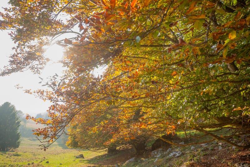 Trees in autumn season. Beauty in nature. Autumn lansdscape. Trees in autumn season background. Beauty in nature. Autumn lansdscape stock images