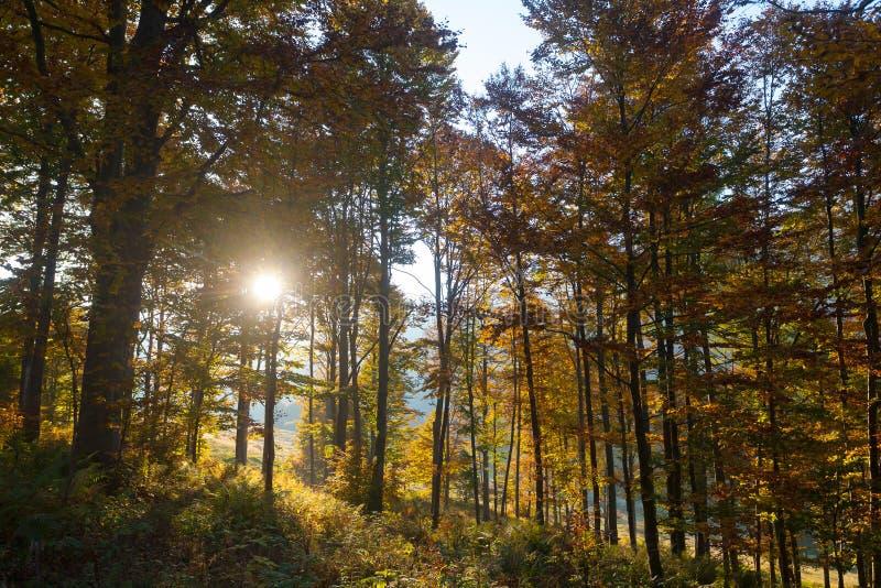 Trees in autumn season. Beauty in nature. Autumn lansdscape. Trees in autumn season background. Beauty in nature. Autumn lansdscape royalty free stock photos