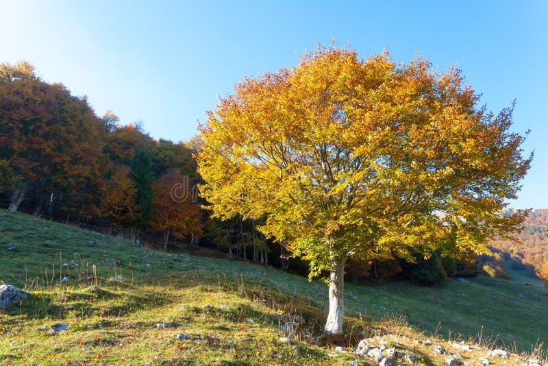 Trees in autumn season background. Autumn lansdscape. Trees in autumn season background. Beauty in nature. Autumn lansdscape stock photos