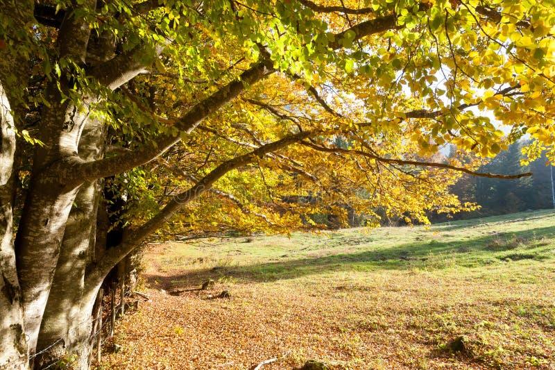 Trees in autumn season background. Autumn lansdscape. Trees in autumn season background. Beauty in nature. Autumn lansdscape stock photography