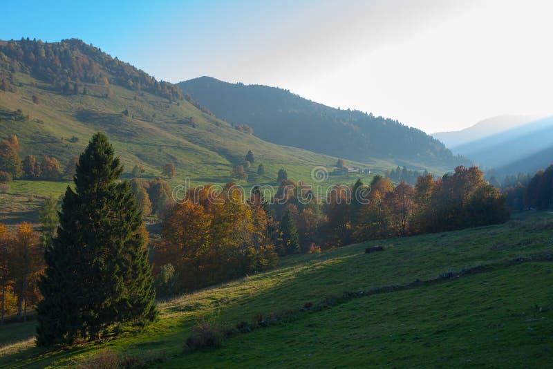 Trees in autumn season background. Autumn lansdscape. Trees in autumn season background. Beauty in nature. Autumn lansdscape stock image