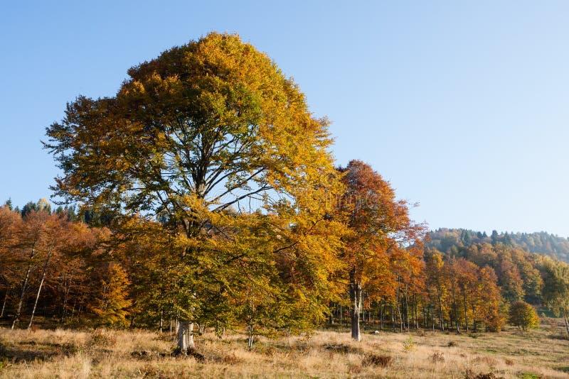 Trees in autumn season background. Autumn lansdscape. Trees in autumn season background. Beauty in nature. Autumn lansdscape stock photo