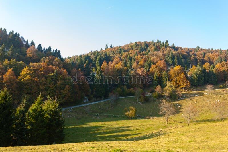 Trees in autumn season background. Autumn lansdscape. Trees in autumn season background. Beauty in nature. Autumn lansdscape royalty free stock photography