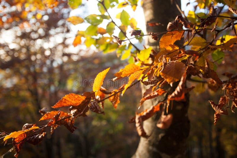 Trees in autumn season background. Autumn lansdscape. Trees in autumn season background. Beauty in nature. Autumn lansdscape stock images