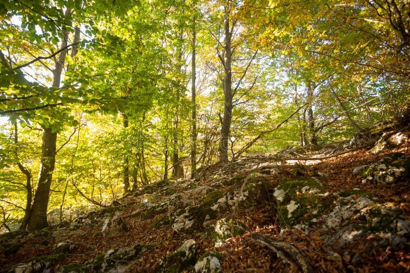 Trees in autumn season background. Autumn lansdscape. Trees in autumn season background. Beauty in nature. Autumn lansdscape royalty free stock image