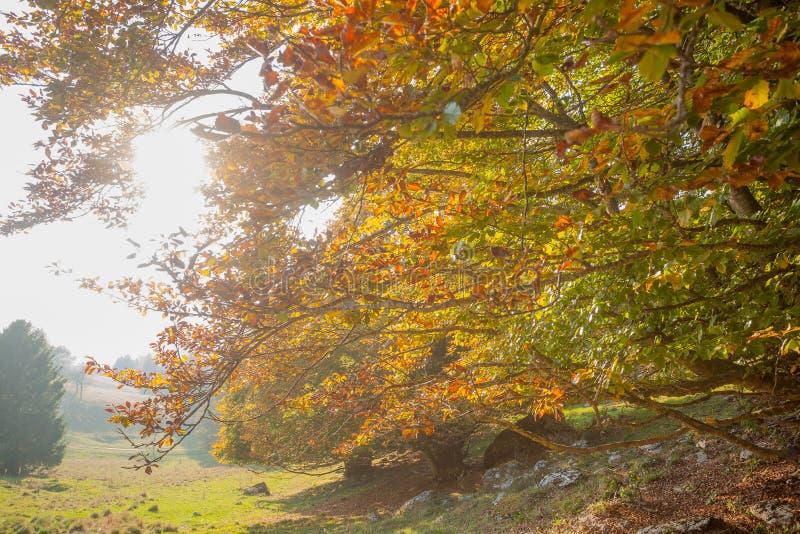 Trees in autumn season background. Autumn lansdscape. Trees in autumn season background. Beauty in nature. Autumn lansdscape royalty free stock photos