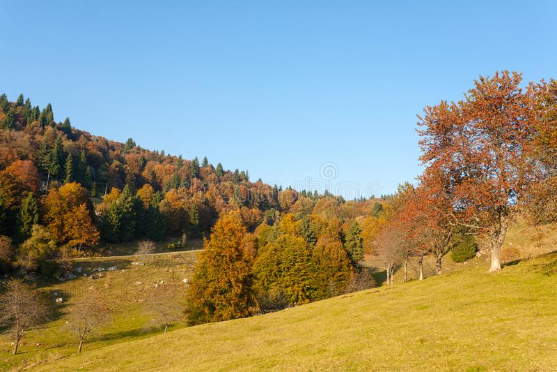 Trees in autumn season background. Autumn lansdscape. Trees in autumn season background. Beauty in nature. Autumn lansdscape foliage landscape mountain woodland royalty free stock images