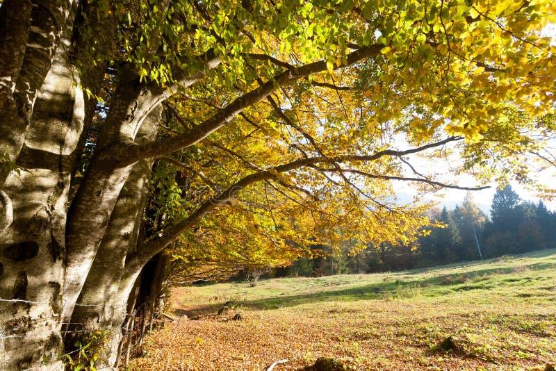 Trees in autumn season background. Autumn lansdscape. Trees in autumn season background. Beauty in nature. Autumn lansdscape foliage landscape mountain woodland royalty free stock image