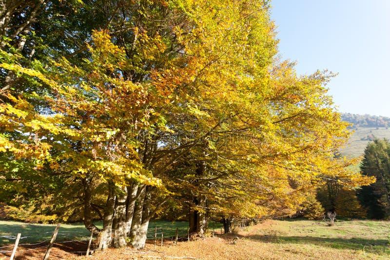 Trees in autumn season background. Autumn lansdscape. Trees in autumn season background. Beauty in nature. Autumn lansdscape foliage landscape mountain woodland stock images