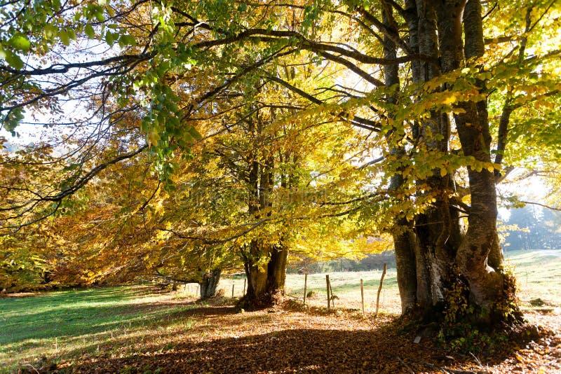 Trees in autumn season background. Autumn lansdscape. Trees in autumn season background. Beauty in nature. Autumn lansdscape foliage landscape mountain woodland royalty free stock photos