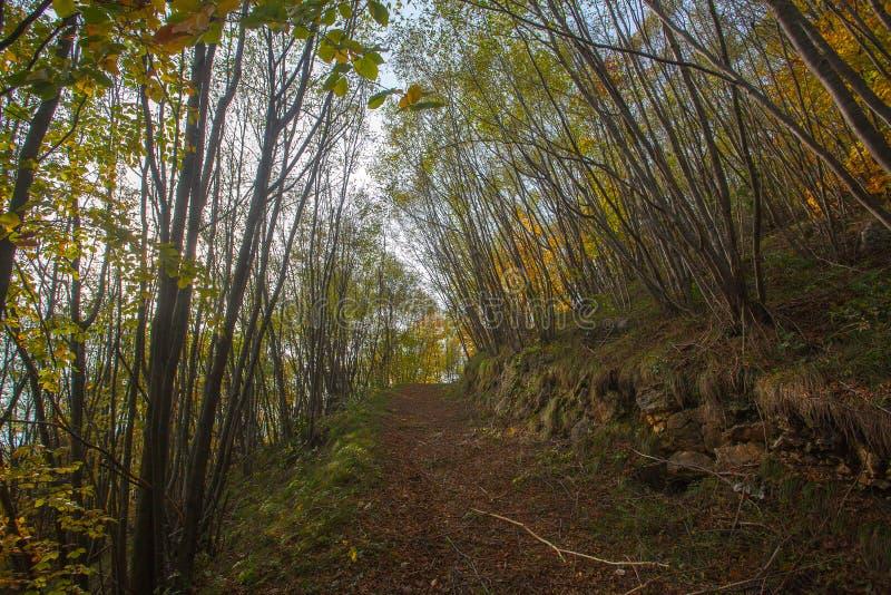 Trees in autumn season background. Autumn lansdscape. Trees in autumn season background. Beauty in nature. Autumn lansdscape, foliage, landscape, mountain stock images