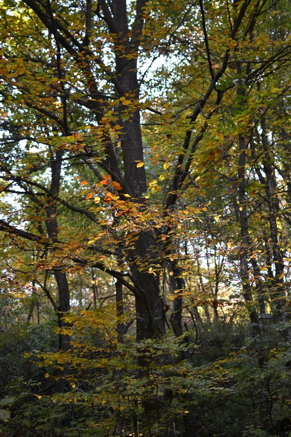 Trees in the autumn royalty free stock photos