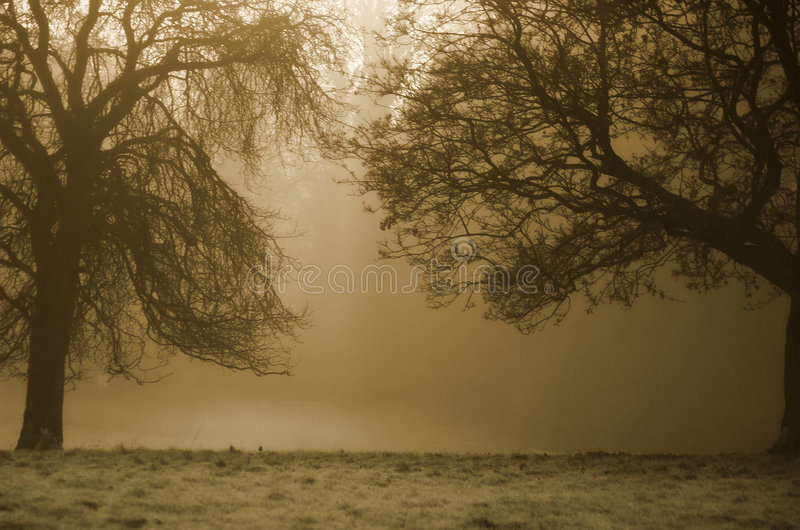 Trees Background royalty free stock photo