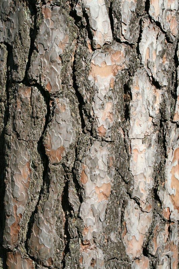 A Trees Bark - Vertical Stock Photo