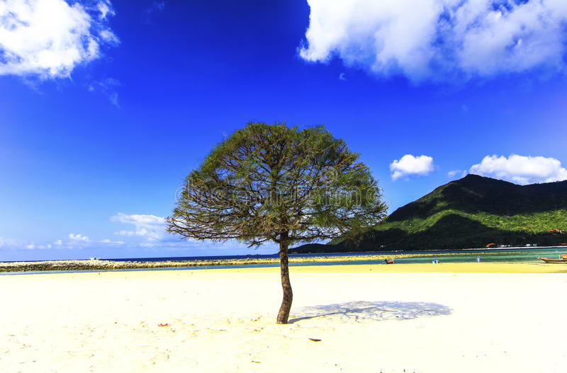 Download Trees On  Beach Blue Sky Summer Thailand Stock Photo - Image: 38258846