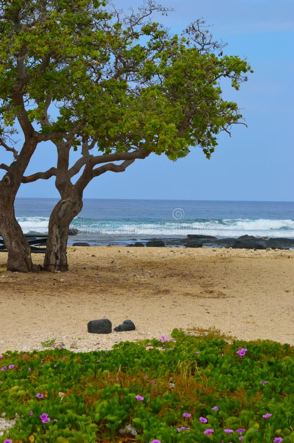 Trees on the beach royalty free stock image