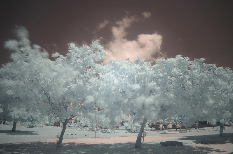 Trees on a beach strip, infra-red, long exposure royalty free stock photos
