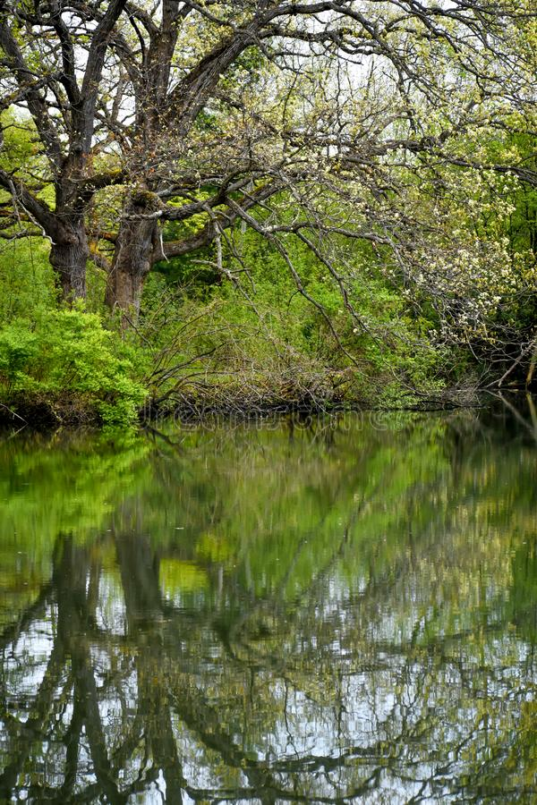 Trees Reflected in the River at White River County Park royalty free stock photo