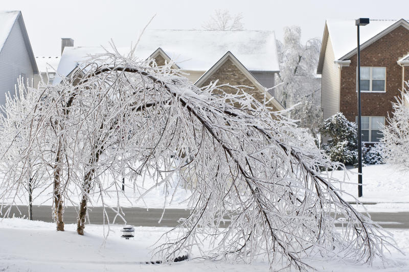 Trees Bent Over From The Weight Of The Ice Stock Images