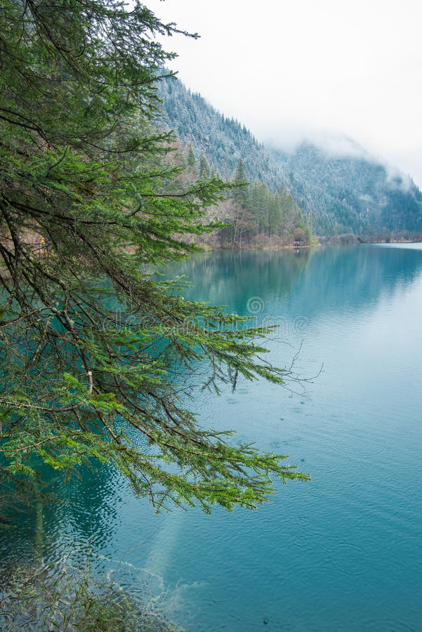 Trees besides the lake. The trees besides the lake stock photography