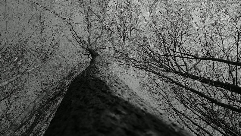 Trees black and white royalty free stock photos
