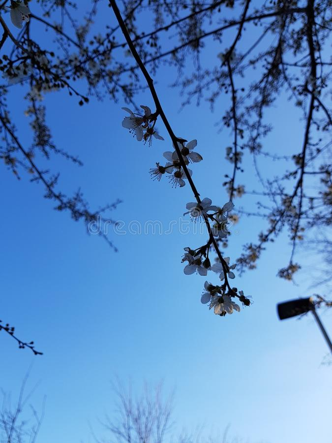 Trees blooming stock images