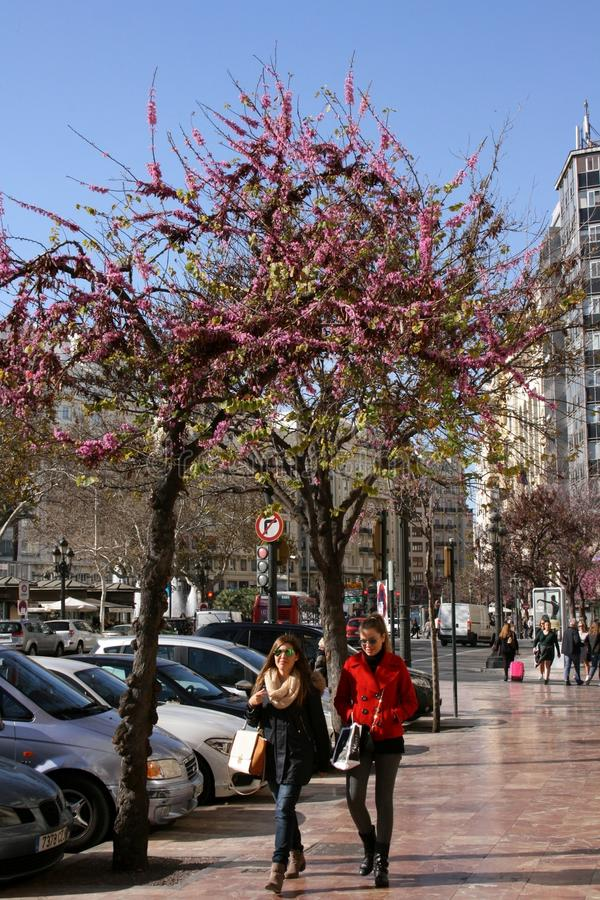 Trees in blossom indicating the arrival of Spring to Valencia, Spain stock image