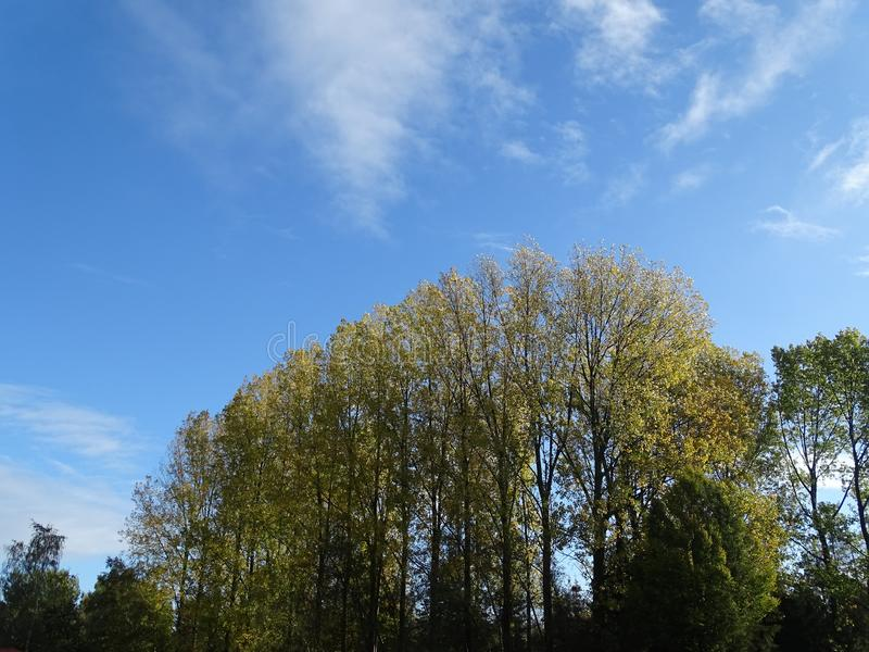 Trees with blue sky in autumn. Trees with green leaves in autumn with blue sky and white clouds royalty free stock photos