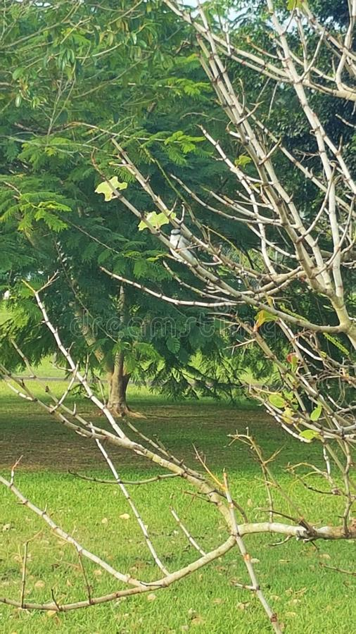 Trees, branches and a bird. stock photo