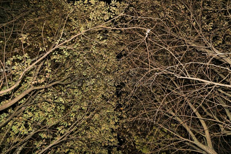 Trees Branches, leaves nature abstract background texture. In night magic mystycal forest royalty free stock images