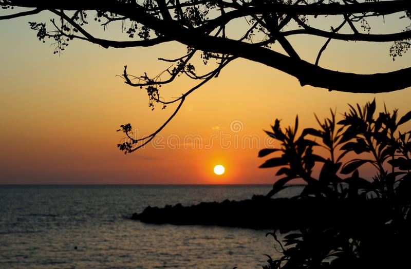 Trees branches silhouette on Adriatic sea horizon, beach, sunset landscape background. stock photo