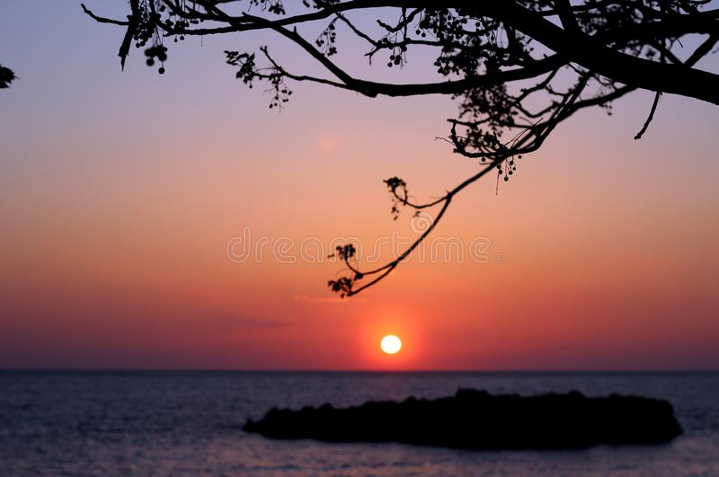 Trees branches silhouette on Adriatic sea horizon, beach, sunset landscape background. stock image