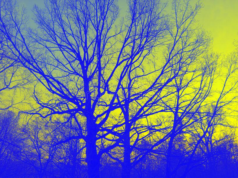 Trees in bright spectral colors blue trees against the yellow sky. royalty free stock images