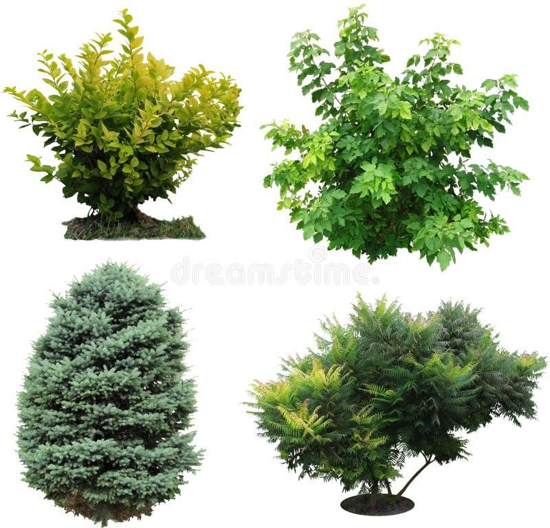 Free Trees, Bushes Izolated. Stock Images - 48347444