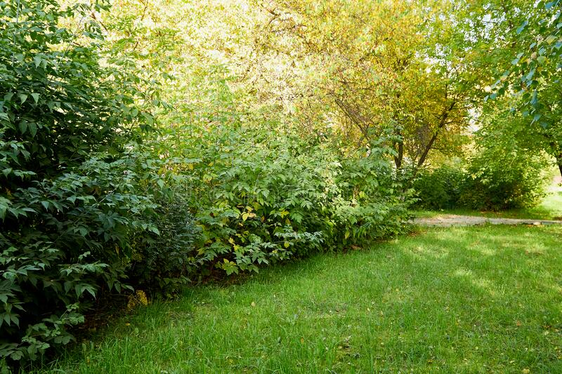 Trees and bushes surrounding a green lawn with grass on a summer or autumn day. With sun stock images