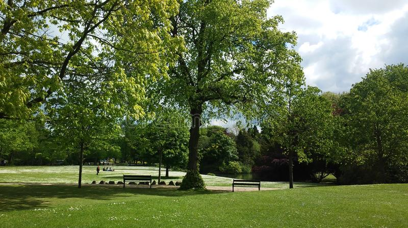 Trees in Buxton park,UK stock photography