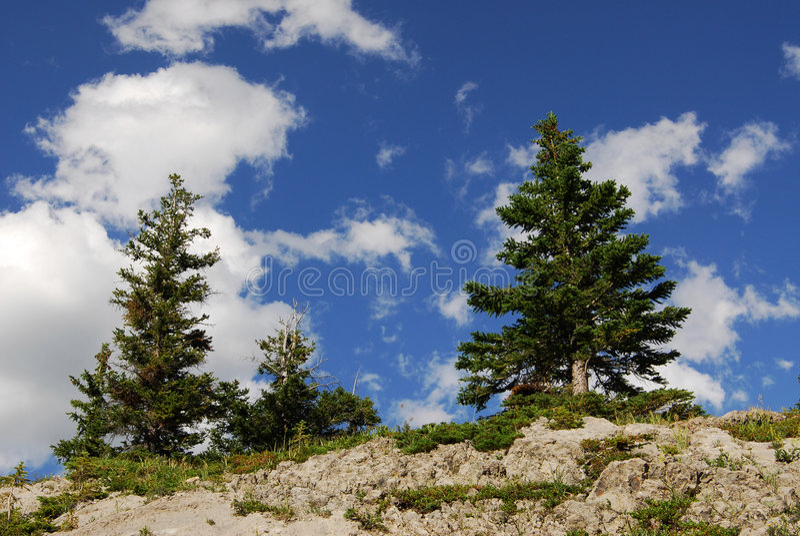 Trees on cliff stock photos