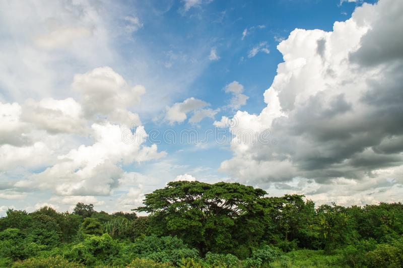 Trees and cloud on blue sky, natural concept. Beautiful abstract of blue sky and cloud, used as background and texture. Take photography at Kok River side in stock photography