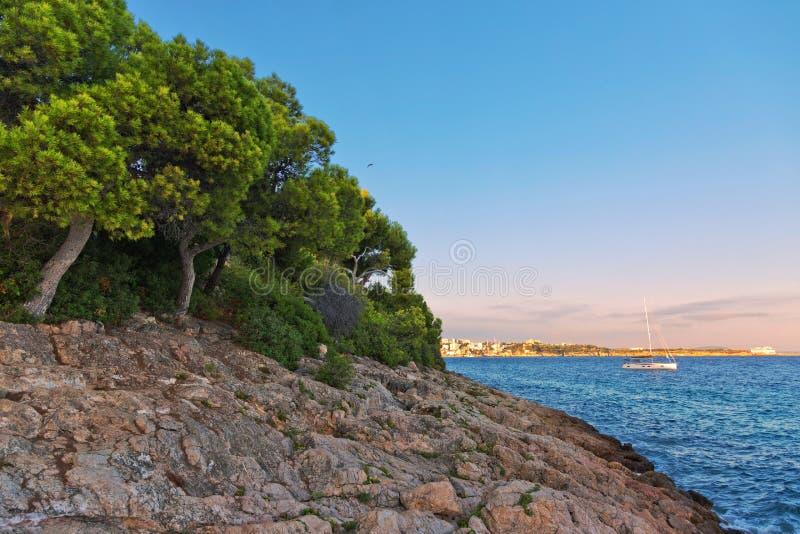 Trees on coastal rocks at sunset time. Mallorca island. Spain Mediterranean Sea, Balearic Islands royalty free stock photography