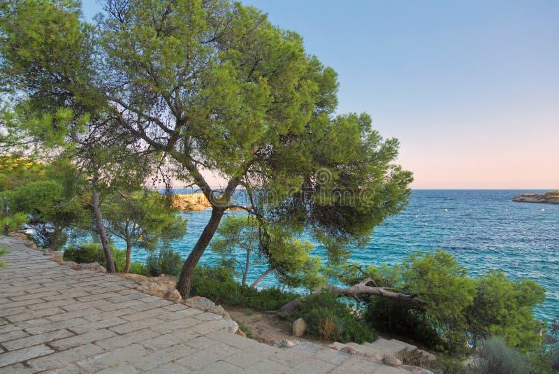 Trees on coastal rocks at sunset time. Mallorca island. Spain Mediterranean Sea, Balearic Islands royalty free stock photos