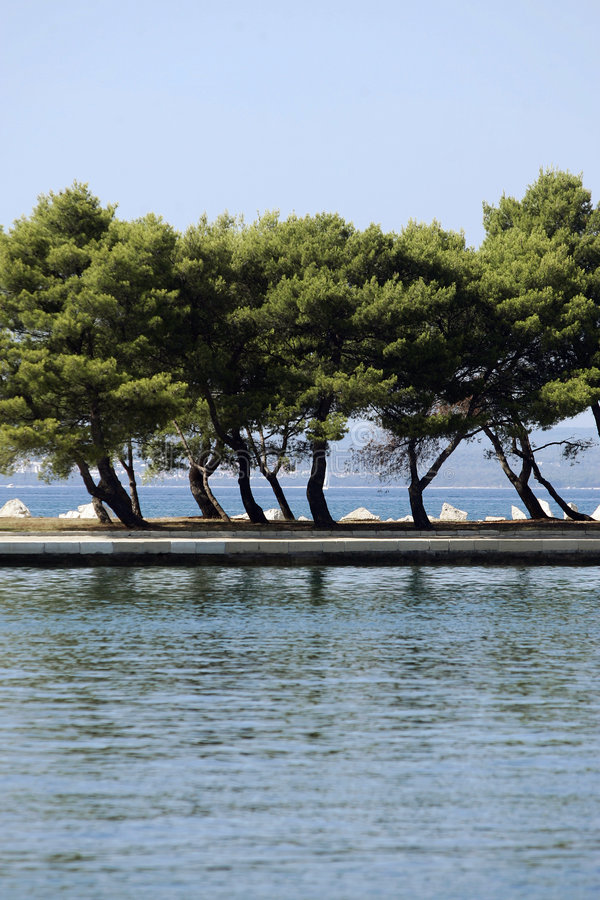 Download Trees On Coastline Royalty Free Stock Photography - Image: 3142097