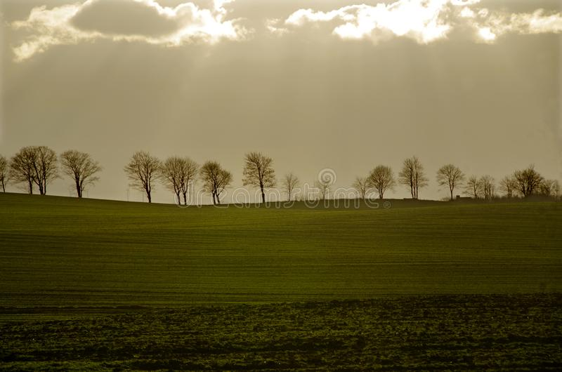 Trees contrasting clouds with translucent sun. A stormy morning, trees in the contrast of clouds with translucent sun on a spring field royalty free stock photos