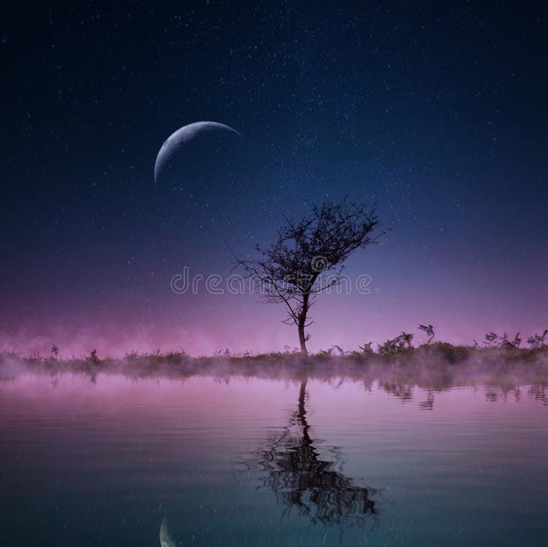 Trees in the country with moon royalty free stock photos