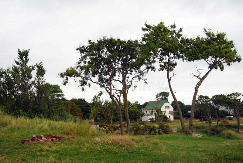 Trees and countryhouse. Baltic spit, Russia