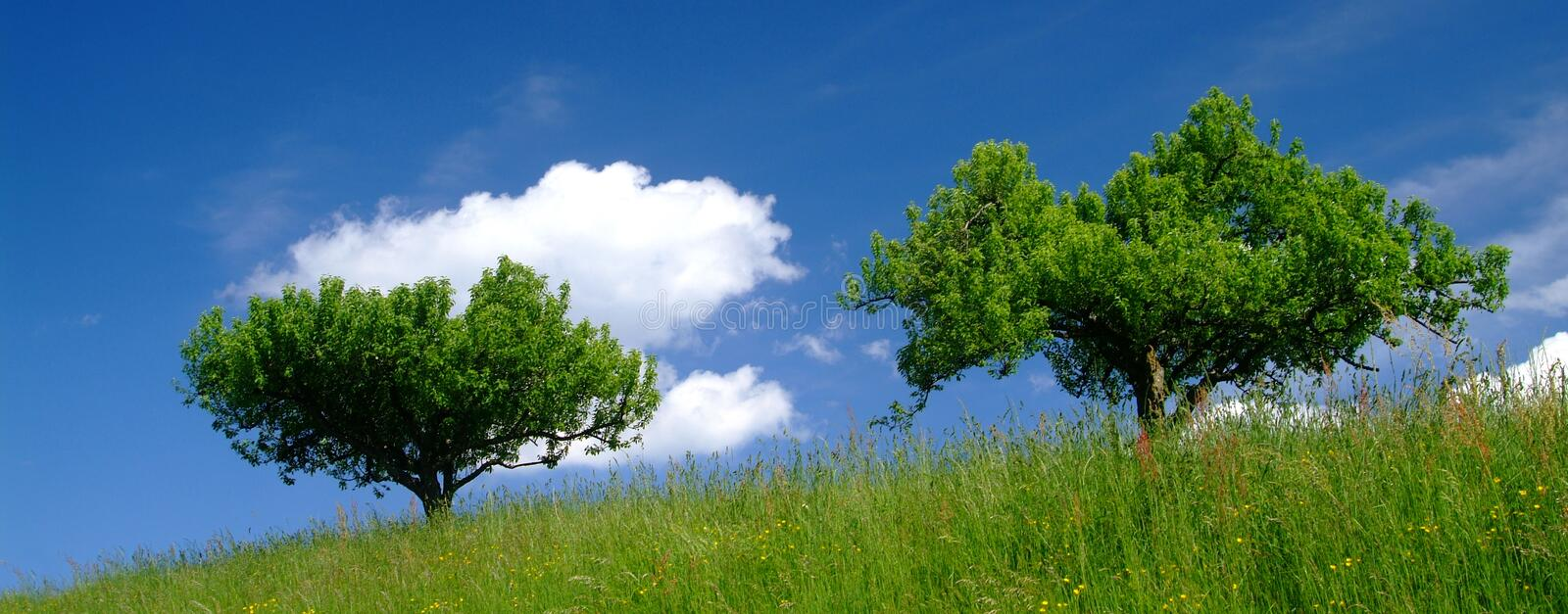 Trees in countryside. Trees on grassy hillside in countryside with blue sky and cloudscape background royalty free stock images