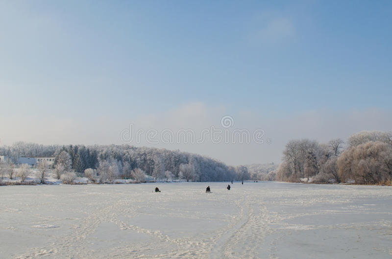 Trees covered with frost in a snowy forest.  royalty free stock photography